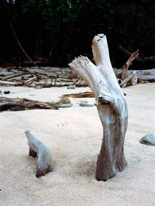 http://michaelmeyerphoto.com/files/gimgs/th-11_11_cabo-blanco-driftwood.jpg
