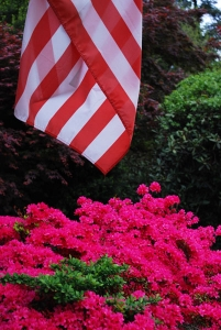 https://michaelmeyerphoto.com/files/gimgs/th-11_11_flagflowers1404.jpg