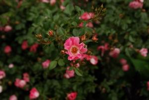 https://michaelmeyerphoto.com/files/gimgs/th-11_11_flower7342.jpg